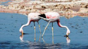 Rezerwat flamingów w Dubaju